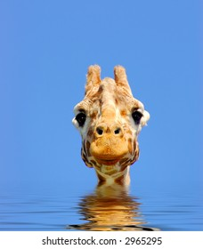 A digital composite of giraffe looking straight at the viewer over gently rippling water.