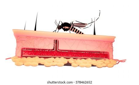 Digital Illustration of Aedes Aegypti