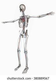 Digital Illustration of Circulatory System