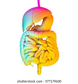 Digital Illustration of a Digestive System