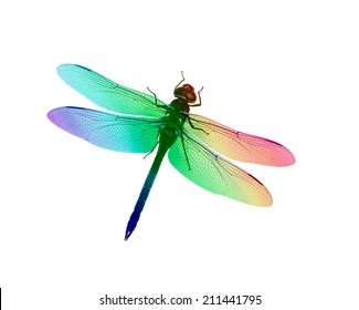 Digital illustration of a dragonfly with rainbow of colors. Created from an original photograph.