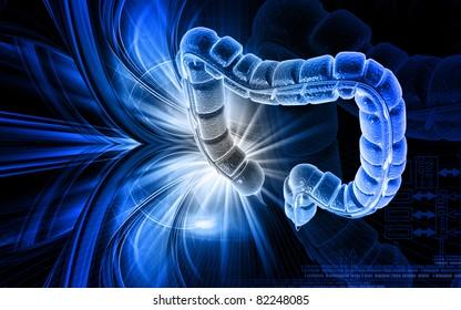 Digital illustration of large intestine in colour background