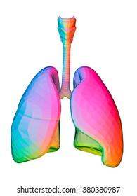 Digital Illustration of lungs