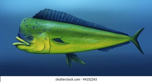 digital illustration of a mahi mahi fish swimming in the ocean