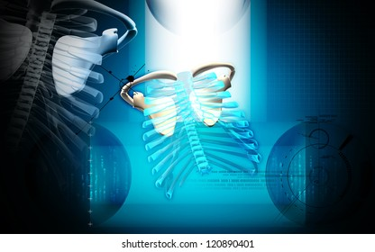 Digital illustration of  rib cage  in colour  background