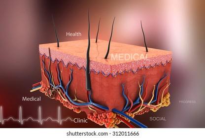 Digital illustration of Skin in color background