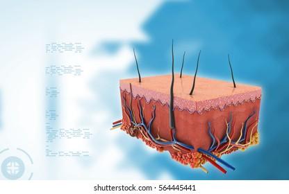 Digital illustration of Skin in colour background 3d