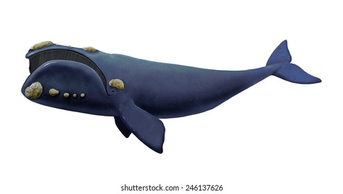 Digital illustration of a Southern right whale