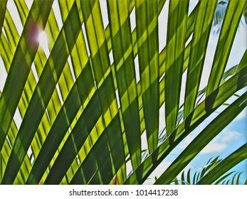 Digital illustration - tropical plant leaf. Exotic garden