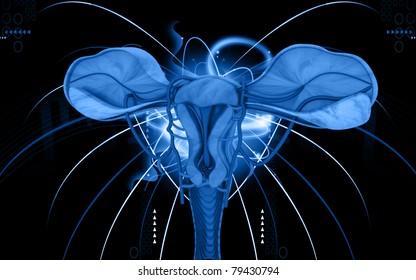 Digital illustration of  Uterus  in  colour  background