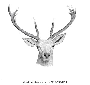 Digital ink illustration of a deer head