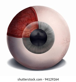 digital painting of the anatomy of the human eye