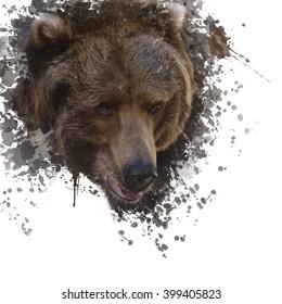 Digital Painting of Brown Bear Head