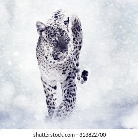 Digital Painting Of Leopard Walking in the Snow