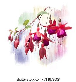 Digital Painting of  Red Fuchsia Flowers