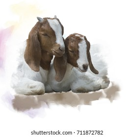 Digital Painting of  Young Boer goats