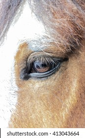 Digital pencil sketch from a photograph of a closeup of the head of a Clydesdale Horse, markings on the face, eye open, calm expression