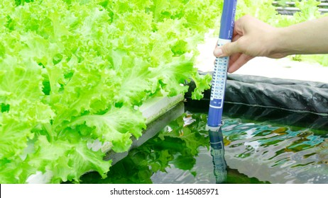 Digital pH meter tester Hydroponics  Controllers , pH Pens, pH Tests, Digital Soil & pH Sensors vegetables in water greenhouse on white foam , Close up.