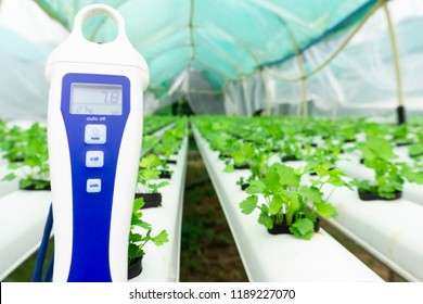 Digital pH meter tester Hydroponics Controllers pH Pens, pH Tests, Digital Soil& pH Sensors vegetables in water at greenhouse hydroponics farm.