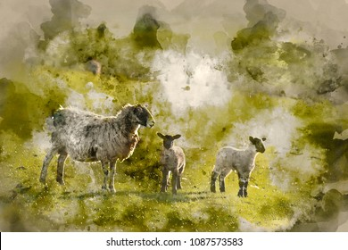 Digital watercolor painting of Beauitful landscape image of Spring lambs and sheep in fields