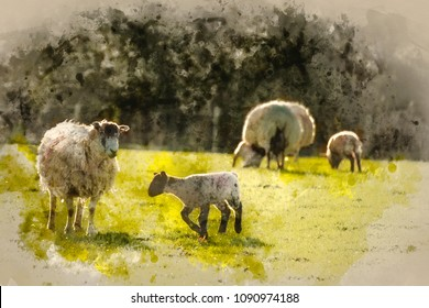 Digital watercolor painting of Beautiful landscape image of Spring lambs and sheep in fields during late evening light