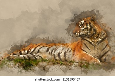 Digital watercolour painting of Beautiful image of tiger relaxing on grassy bank
