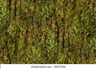 digitally altered seamless texture mossy bark on rain forest tree background