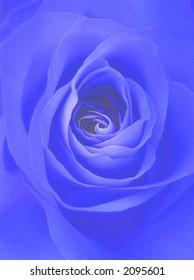 digitally enhanced photograph of a perfect rose
