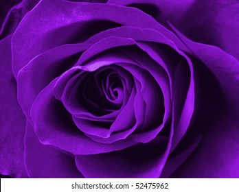 digitally enhanced purple rose background