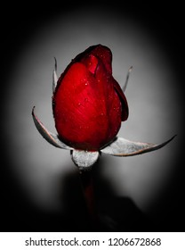 A digitally manipulated photograph of a single red rose in front of a light grey backdrop with an added black vignette border for artistic effect. This photo was taken in Brisbane, Australia.
