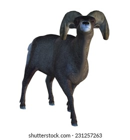 Digitally rendered illustration of a big horn sheep on white background.