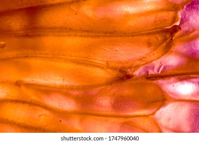 Digitally retouched photos of lemon pulp in macro to be used as background