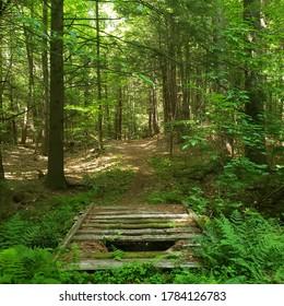 Dilapidated footbridge in the woods, Massachusetts