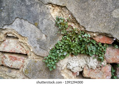 dilapidated wall with plants in the old town of Karlovy Vary in the Czech Republic