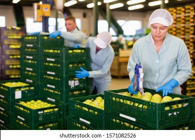 Diligent  serious female employee of fruit warehouse in uniform labeling fresh ripe apples in crates