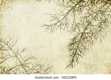 Dill ( Anetum ) leaves.  Old paper textured background. Minimalist style
