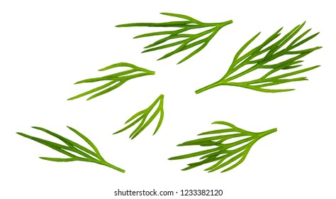 Dill. Fresh dill collection isolated on white.