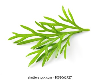 Dill. Fresh dill isolated.