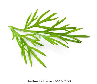 Dill. Fresh dill isolated on white.