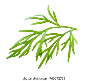 Dill. Fresh dill on white. Dill isolated.
