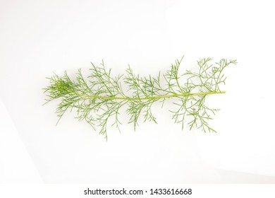 Dill, green leaves on white background.