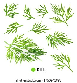 Dill isolate. Fresh dill isolated on white. Set of dill. Top view.
