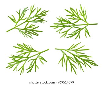 Dill isolated. Dill on white.