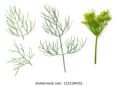 Dill isolated on white background. Top view