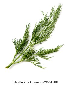 dill parsley to eat on a white background