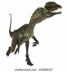 Dilophosaurus Dinosaur over White - Dilophosaurus was a theropod carnivorous dinosaur that lived in the Jurassic Period of Arizona.