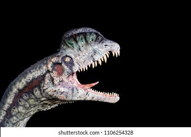 Dilophosaurus on black background