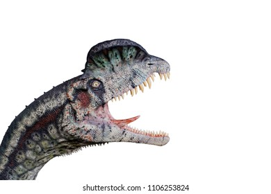 Dilophosaurus on white background