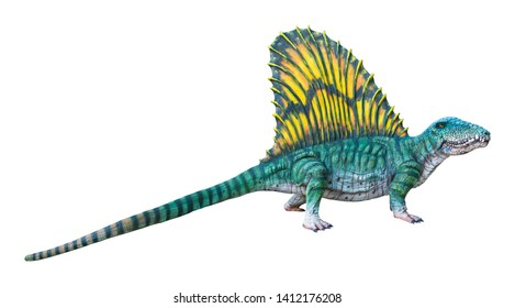 Dimetrodon is a carnivore genus of Synapsids that lived during the Cisuralian, isolated on white background with clipping path