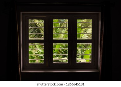 A dimly lit window with a view of lush green vegetation.